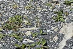 Broken Stabilizer (Close-up)